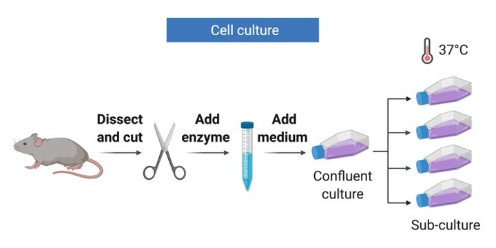 Cell Culture - Research Tweet 1