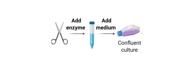 Primary Cell Culture - Research Tweet