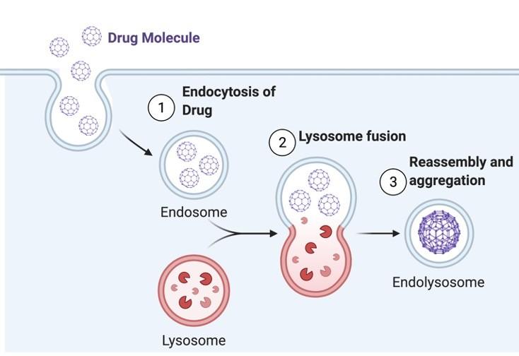 Cellular Drug Uptake - Research Tweet 1