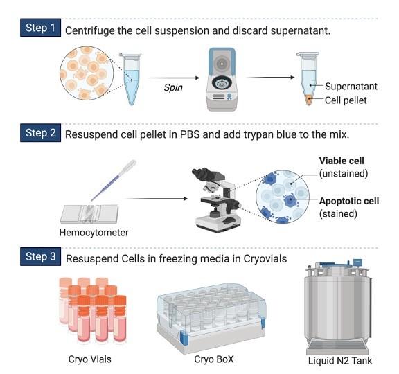 Cryopreservation - Research Tweet 1