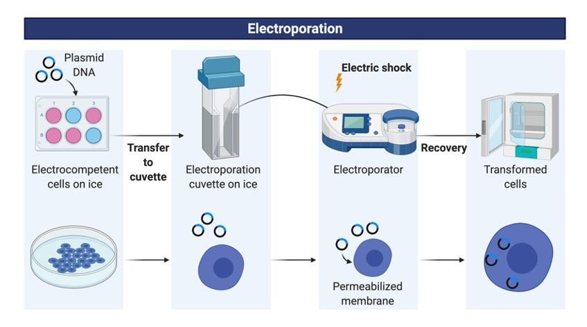 Electroporation - research tweet 1