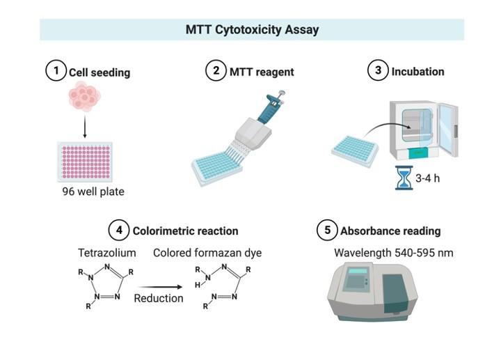 MTT assay - research tweet 1