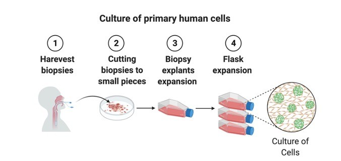 Primary Cell Culture - Research Tweet 1