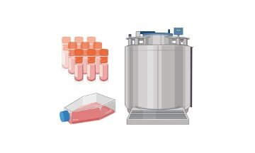 Thawing of Frozen Cell Lines- Cell Revival Protocol