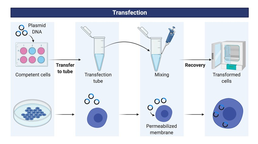 Transfection - Research Tweet 1