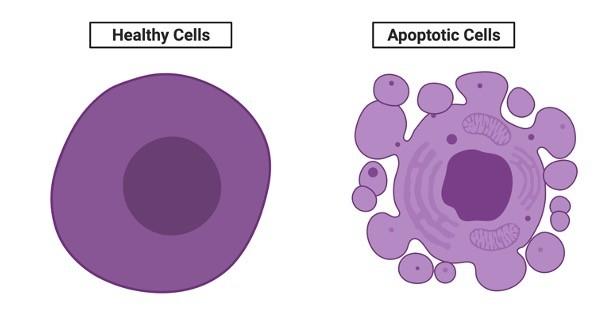 apoptosis - research tweet 1
