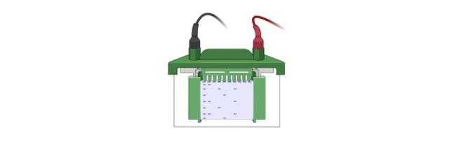 electrophoresis - research tweet 1