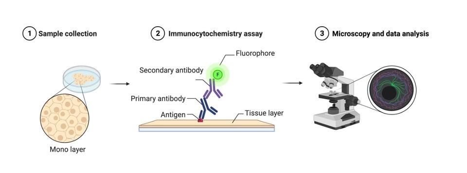 immunocytochemistry - research tweet 1
