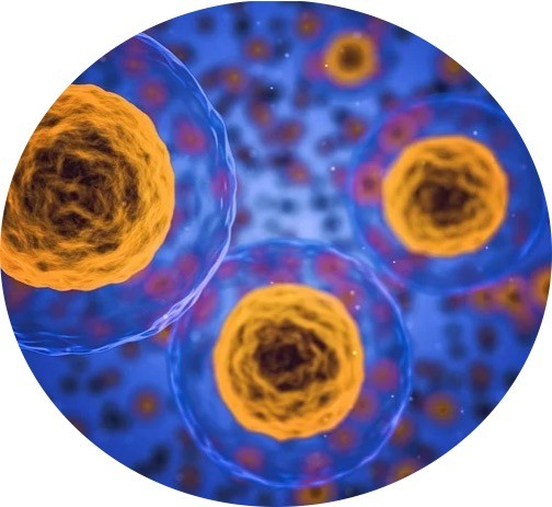 Cells Structure and Functions - Research Tweet