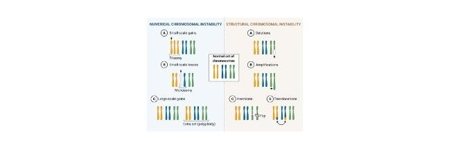 Chromosomal Instability - research tweet