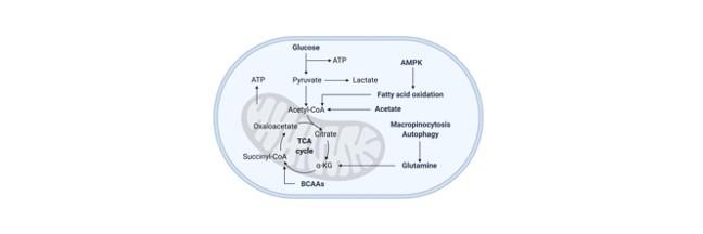 Citric acid cycle - research tweet