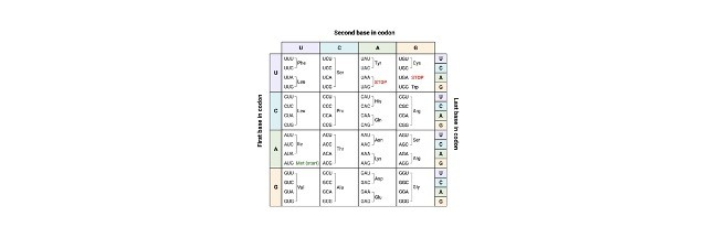 Genetic Code: Chart, Table, Definition, and Examples Codon- Definition, Function, and Mechanism I Research Tweet 1