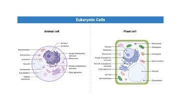 Cytoplasm Function - research tweet