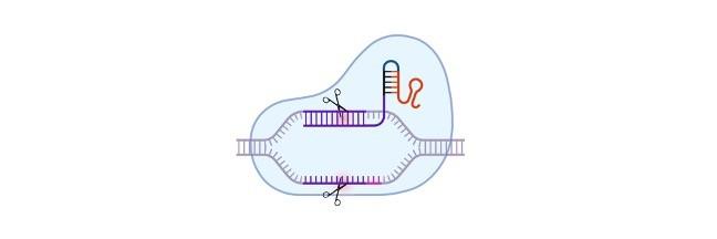 Genetic Disorder - research tweet