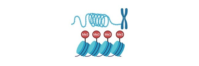 Histone Protein - research tweet