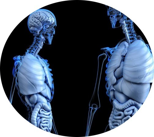 Human Physiology - Research Tweet