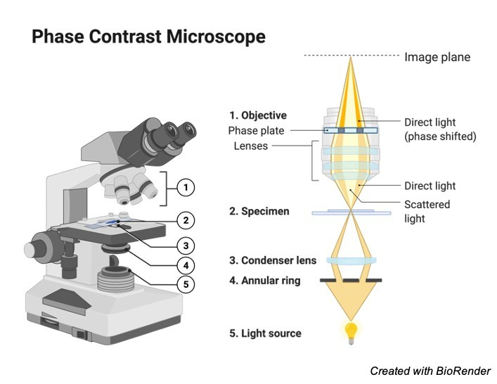 Microscope Parts - Research Tweet 2