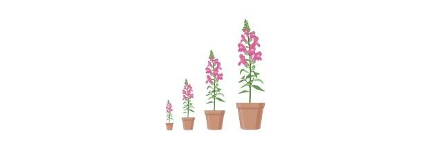 Plant Growth Regulators - gibberellins - research tweet
