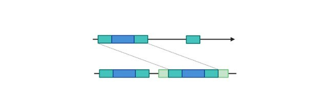 Repetitive DNA Sequences- Definition, Types, and Meaning