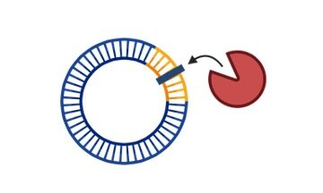 Restriction Enzymes - research tweet