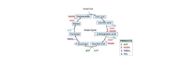 TCA Cycle Krebs Cycle - research tweet