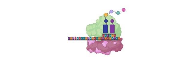 Transfer RNA (tRNA) - research tweet