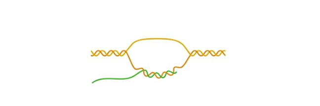 What is Gene - research tweet