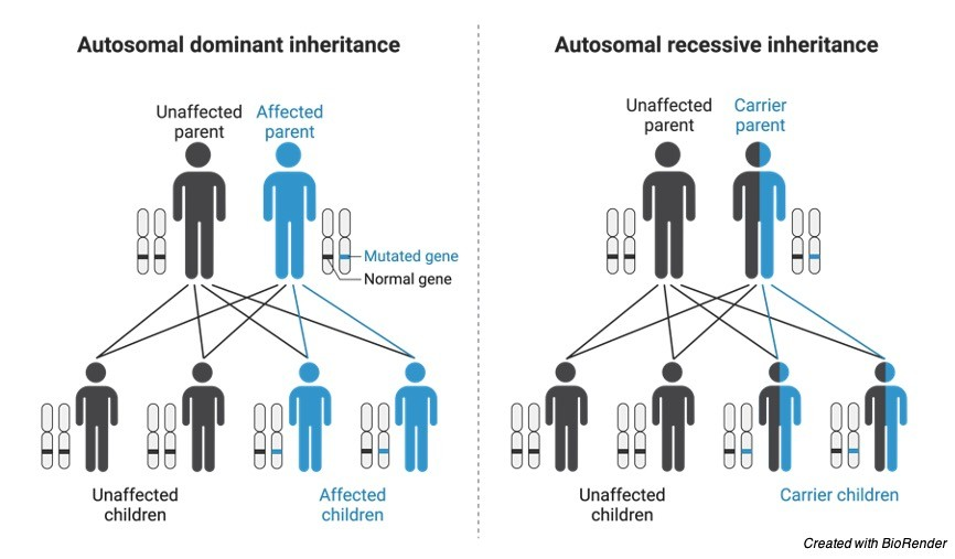 Autosomes Chromosomes - research tweet 1