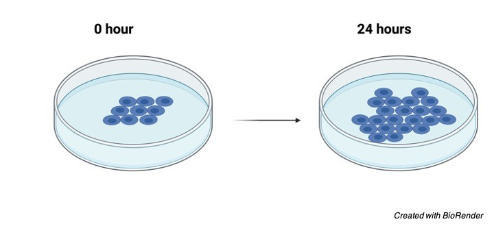 Cell Proliferation - Research Tweet 1