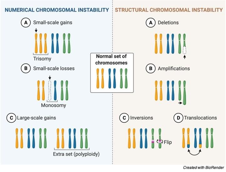 Chromosomal Instability - research tweet 2