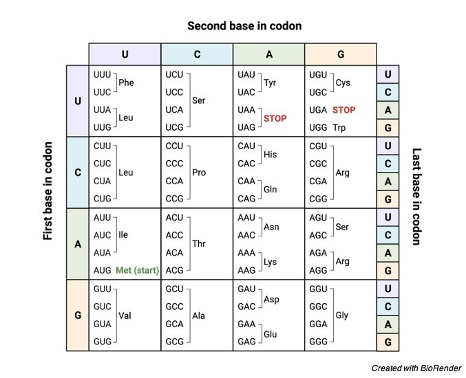 Genetic Code Chart, Genetic Code, Table, Definition, and Examples Codon- Definition, Function, and Mechanism I Research Tweet