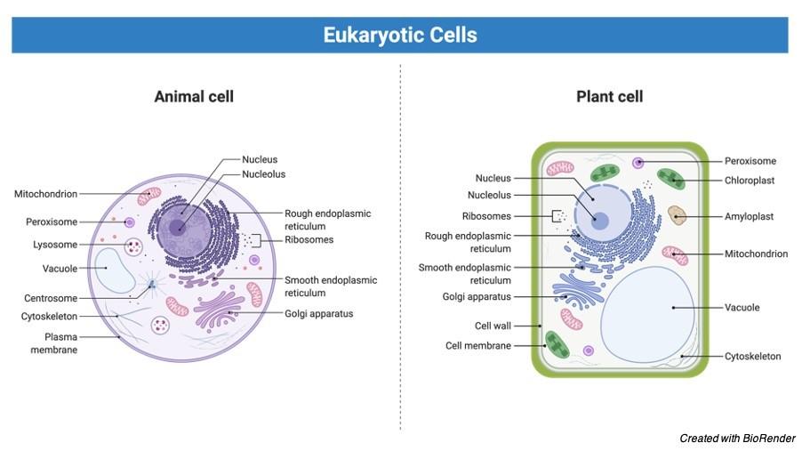 Cytoplasm Function - research tweet 1