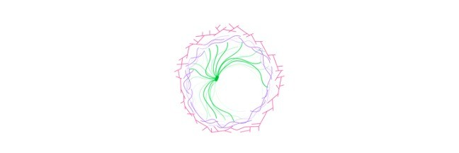 Cytoskeleton, Cytoskeleton Function, what is Cytoskeleton, what does the Cytoskeleton do