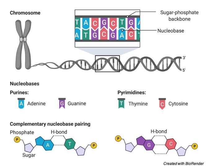 DNA Definition, Discovery, Function, and Bases - research tweet 1