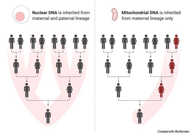 Genetic Disorder - research tweet 3