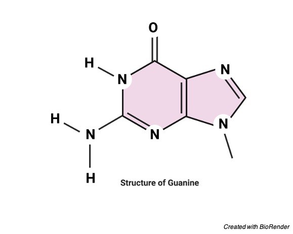 Guanine Structure, Definition, and Functions - research tweet 1