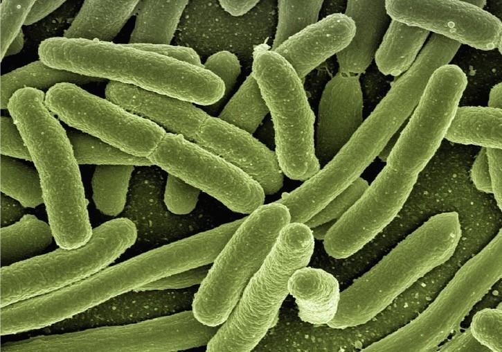 Lactobacillus - research tweet