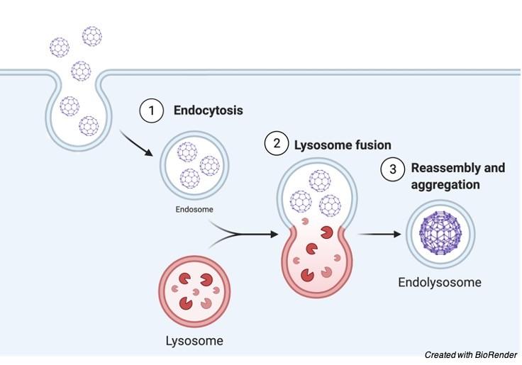 Lysosome - Research Tweet 4
