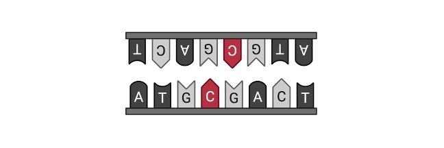 Mutations Definition - frameshift mutations 1
