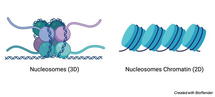 Nucleosome Structure - research tweet
