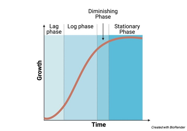 Phases of Growth Growth Curve- research tweet 1