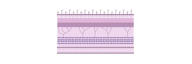 Plasma Membrane, Cell Membrane, Plasma Membrane Structure, Plasma Membrane Function