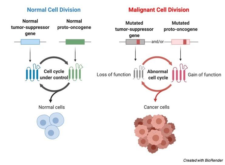 Proto-Oncogene - research tweet 1