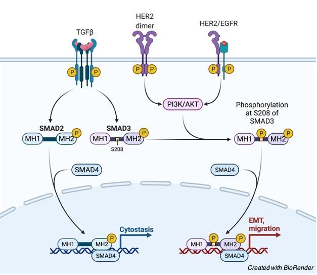 Proto-Oncogene - research tweet 2