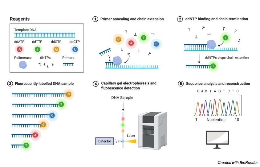 Sanger DNA Sequencing - research tweet 2