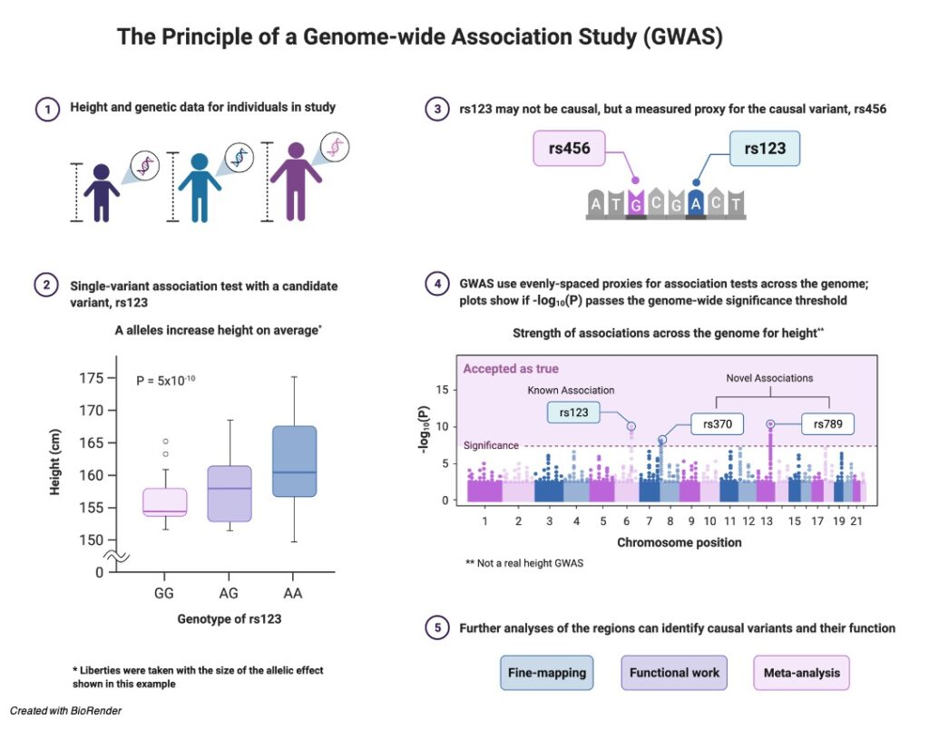 Single Nucleotide Polymorphism- Definition, Function, and Examples -research tweet 1