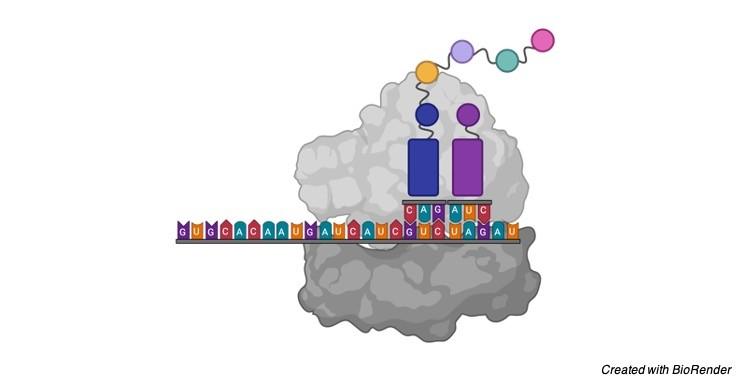 rRNA - research tweet 1