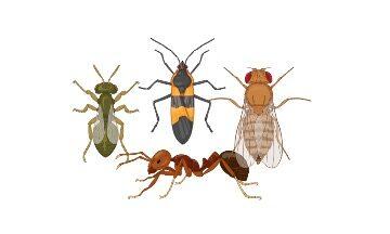 Arthropod, Arthropods, What is Arthropod, Arthropods Definition, Arthropods Exampale,