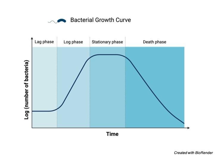 Bacterial Growth, Bacterial Growth Curve, Bacterial Growth Definition, Bacterial Growth Stages, Bacterial Growth Graph 1