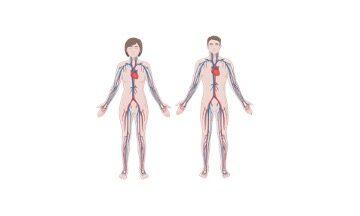 Closed Circulatory System, Closed Circulatory System Definition,